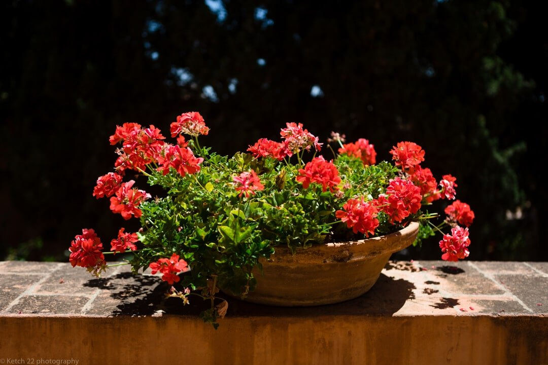 Beautiful red flowers at wedding venue