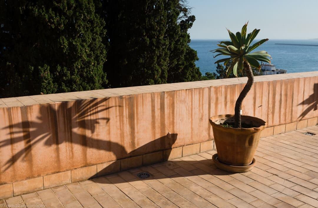Potted palm plant at Malaga Wedding venue