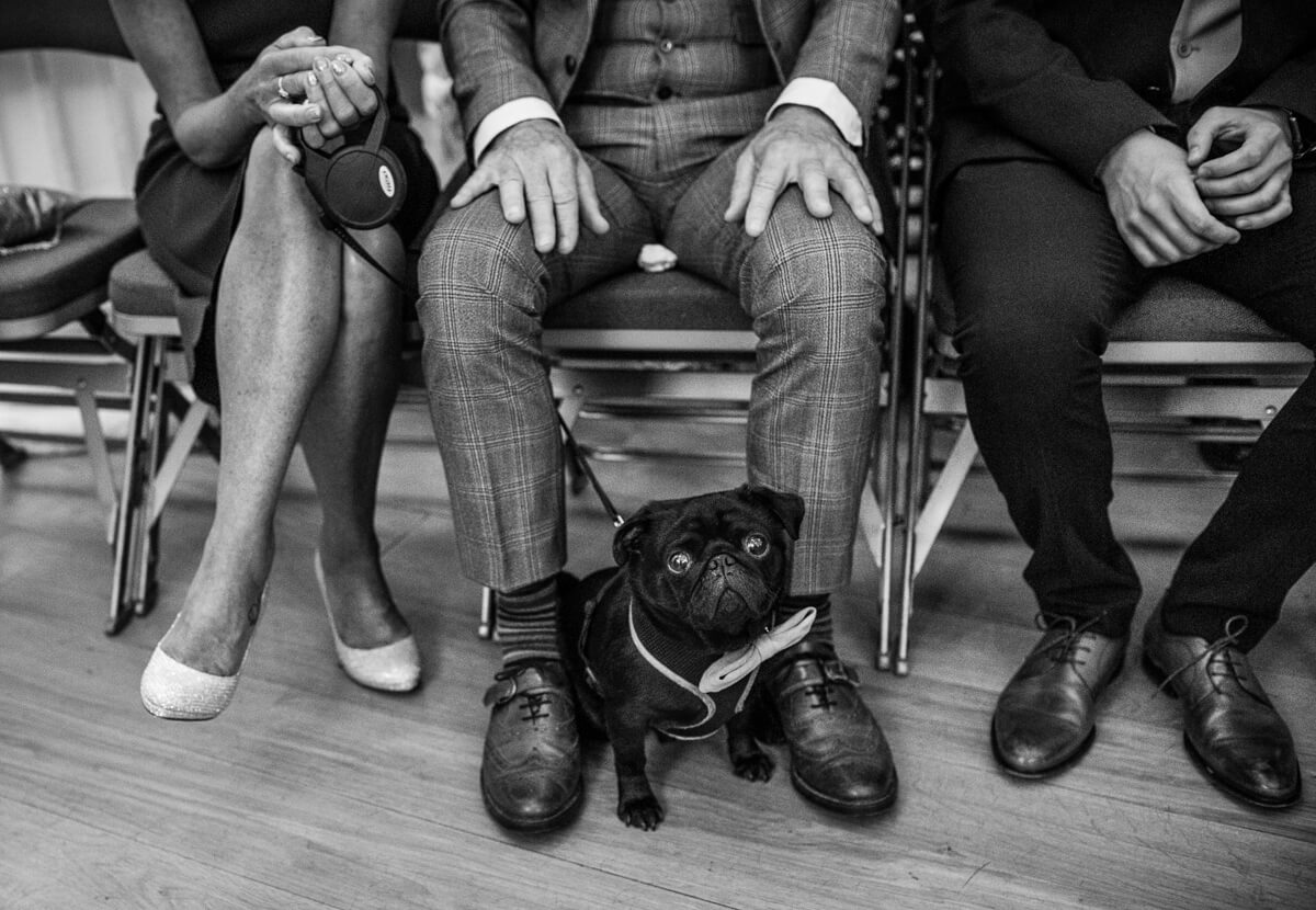 black dog at spanish wedding